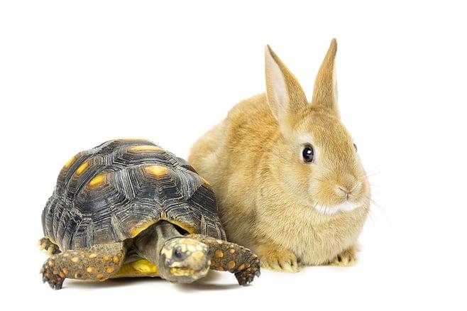 fast-vs-slow-inbound-marketing.jpg